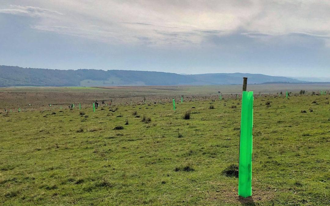 A székelyhodosi (Románia) legelő ökológiai helyreállítása